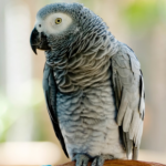All Creatures Healthcare can help you prepare your exotic bird for colder months