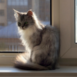'Pain' behaviours that every cat owner in Norwich should be able to spot