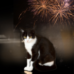 Six actions cat owners in Norfolk should take now to prepare for fireworks season